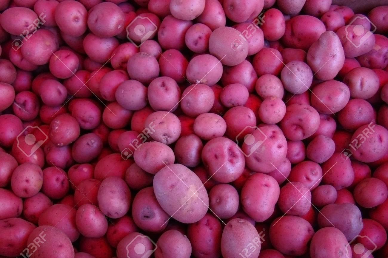 frsh red potatoes Stock Photo - 32867953