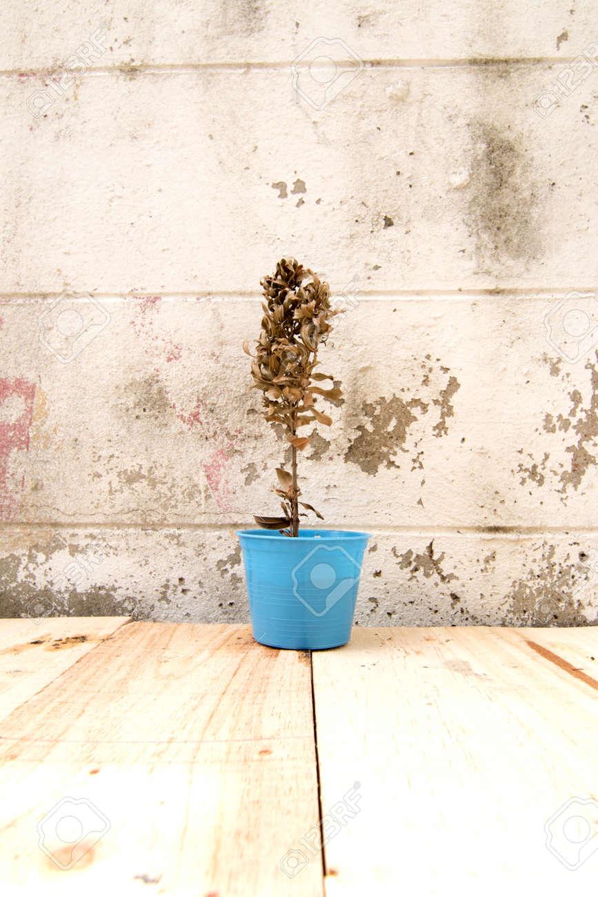 Trockenen Baum In Den Topf Mit Weissen Wand Hintergrund Lizenzfreie