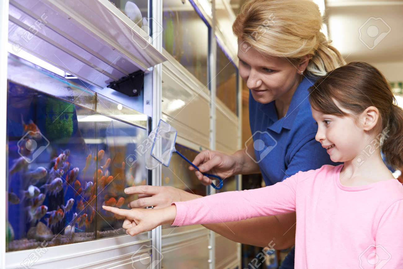 girl s assistant choosing goldfish in pet store stock girl s assistant choosing goldfish in pet store stock photo 45008525