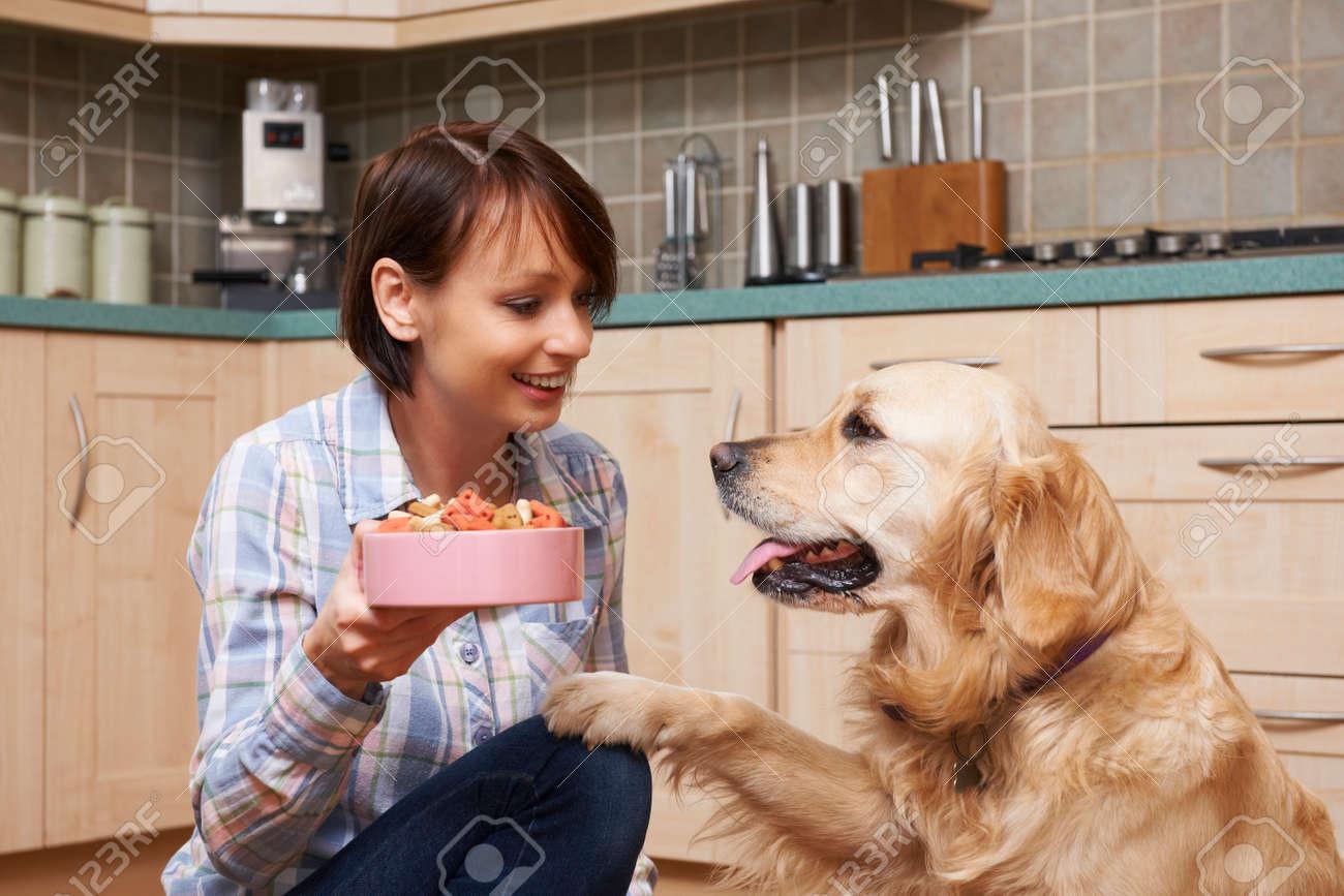 Donner Golden Retriever Repas De Biscuits Pour Chiens Dans Bowl Proprietaire Banque D Images Et Photos Libres De Droits Image 49600629