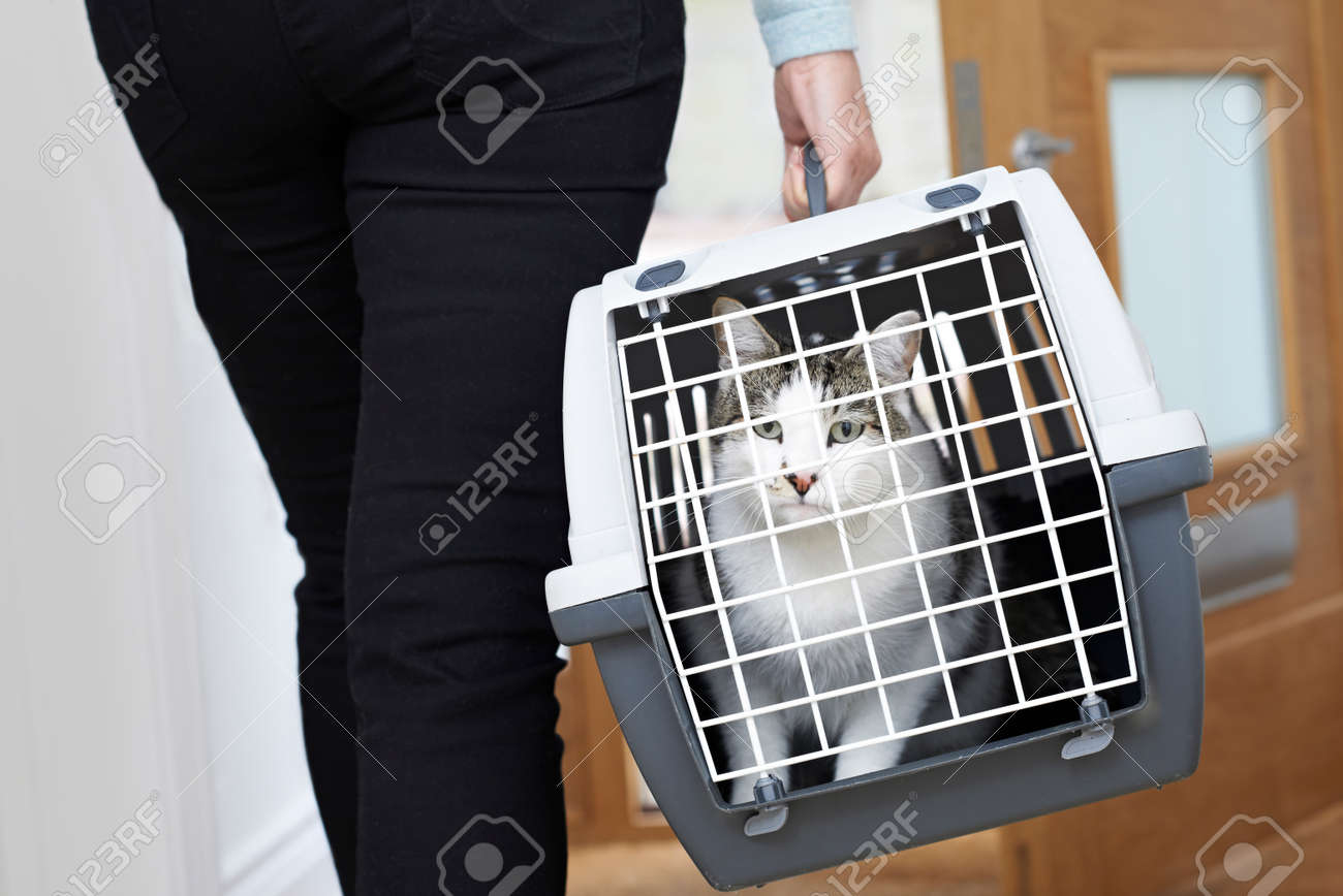 Woman Taking Pet Cat To Vet In Carrier - 58984278