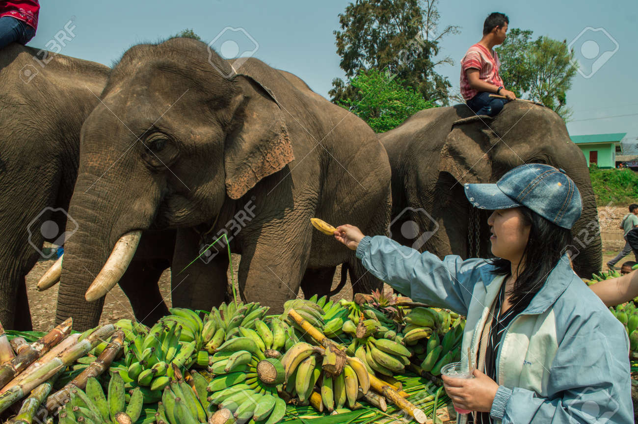 March 13: the day of the elephant in Thailand, the day of Pluto in the USA (Illinois). Holidays March 13 33