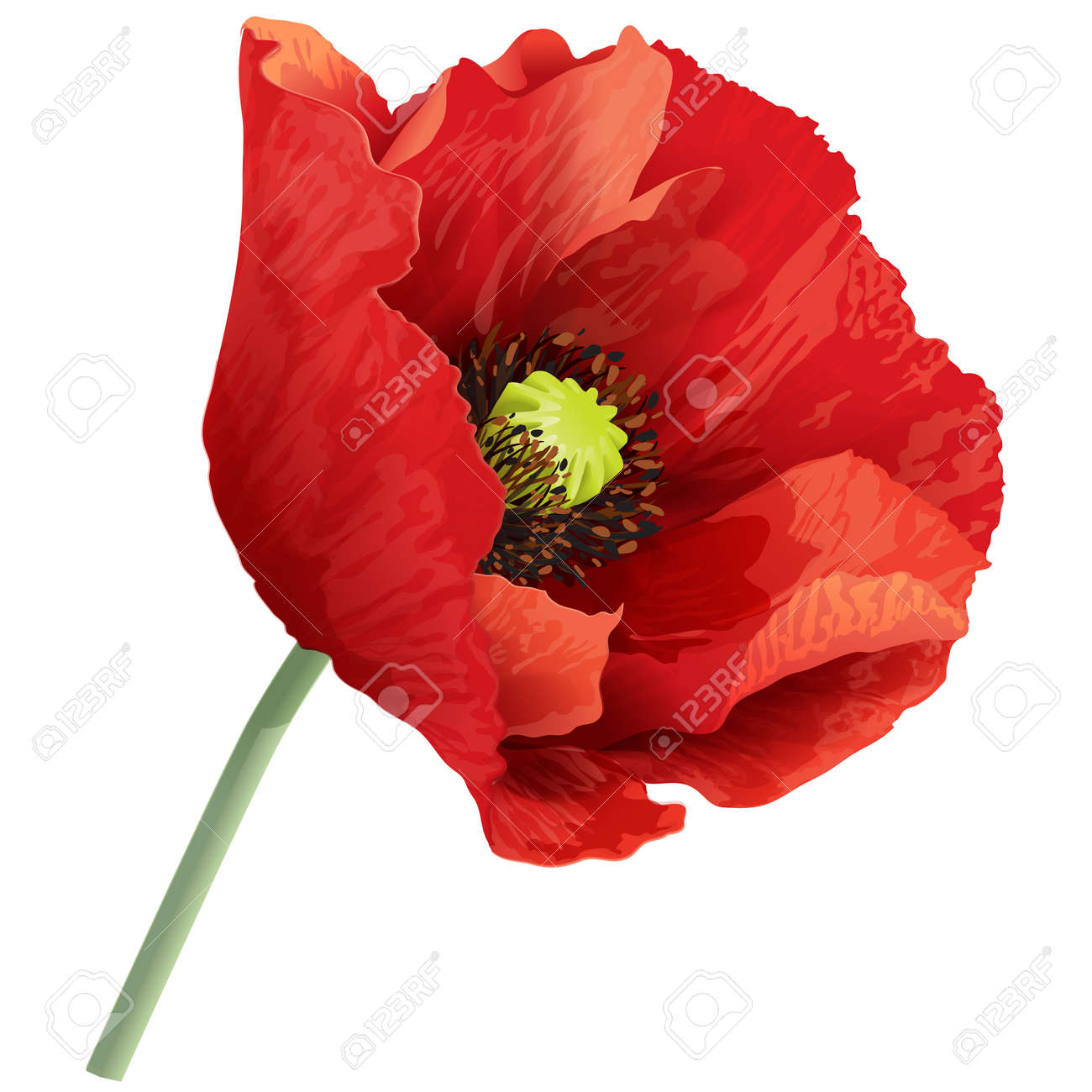 Vector Illustration Of Red Poppy Flower On A Green Stem Royalty