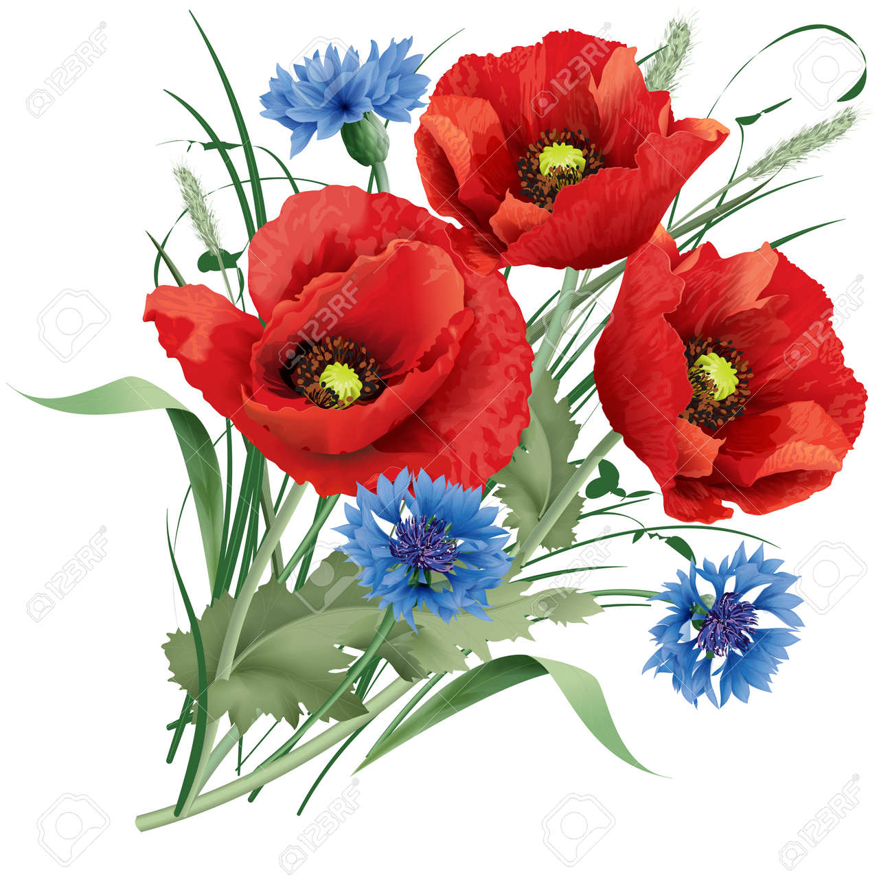Vector illustration bunch of red poppy flower with green leaves, blue cornflakes and hare's-foot clover. - 52822796
