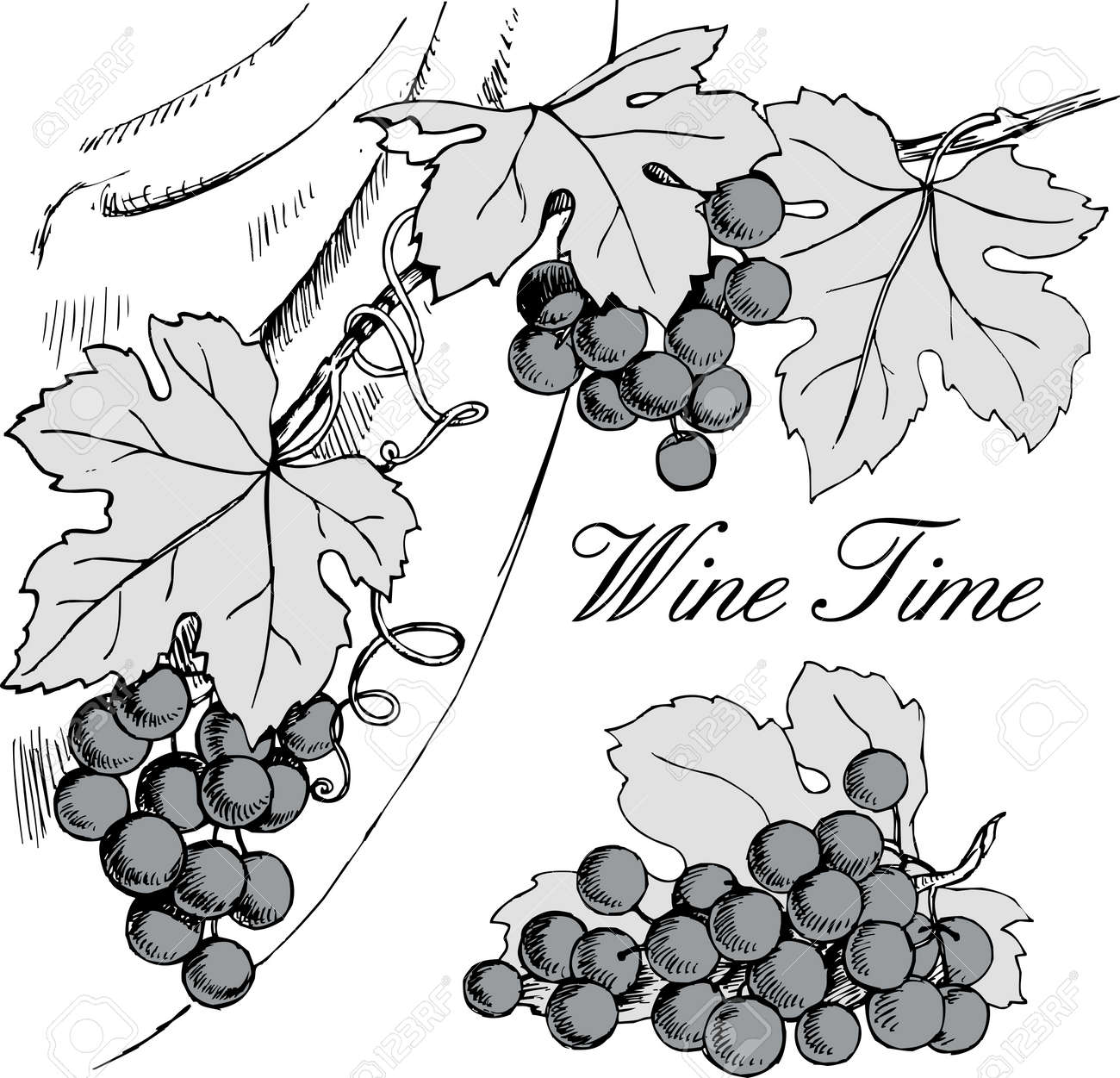 Vector Hand Drawn Black And White Illustration Of Grape Branches ...