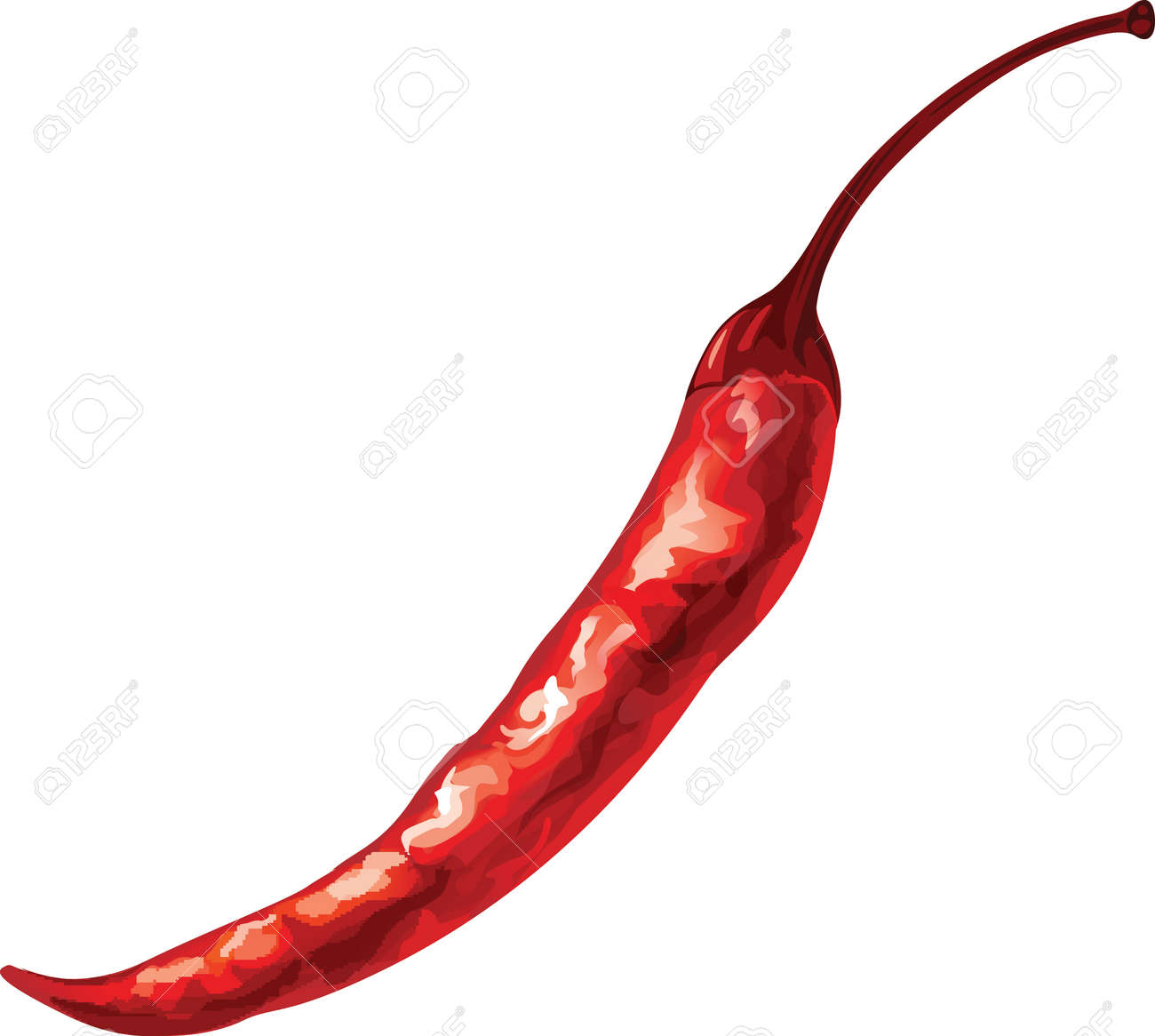 Watercolor vector drawing of red chili pepper. - 58032037
