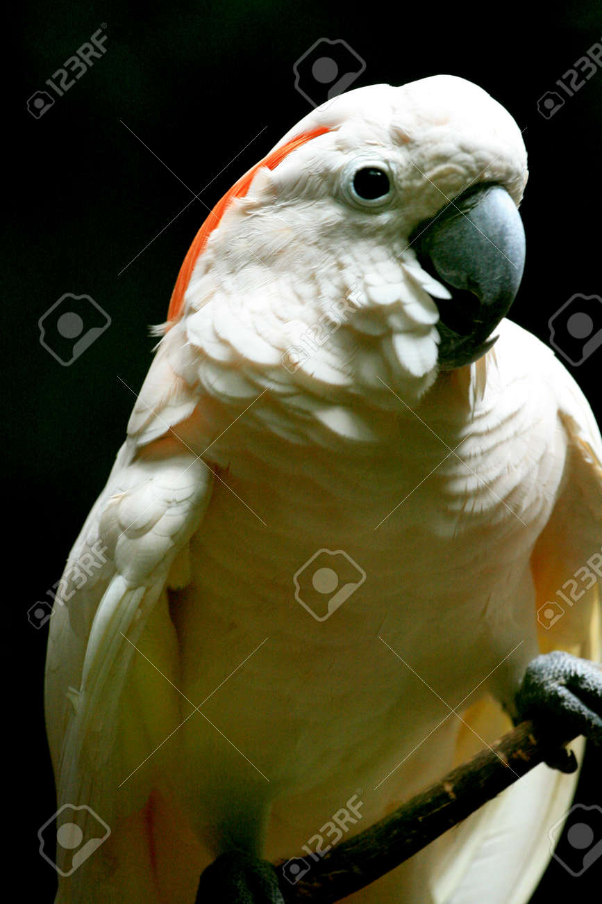 parrot in the zoo Stock Photo - 18169766