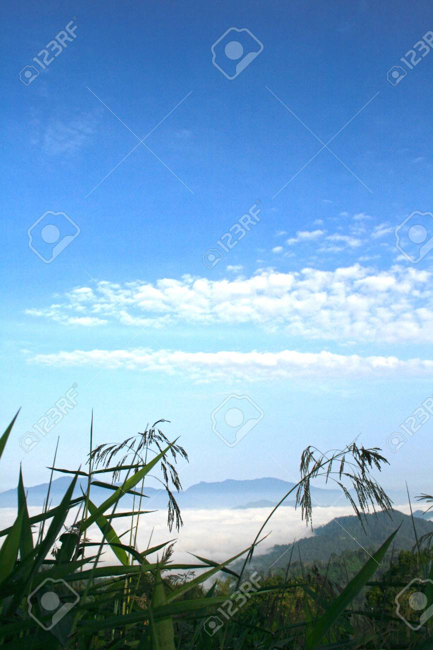 Sea of fog in the morning Stock Photo - 18169905