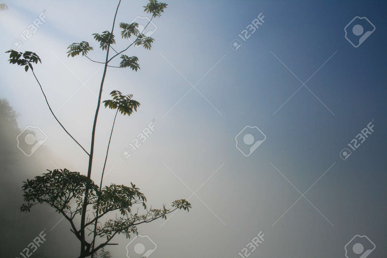 Sea of fog in the morning Stock Photo - 18169756