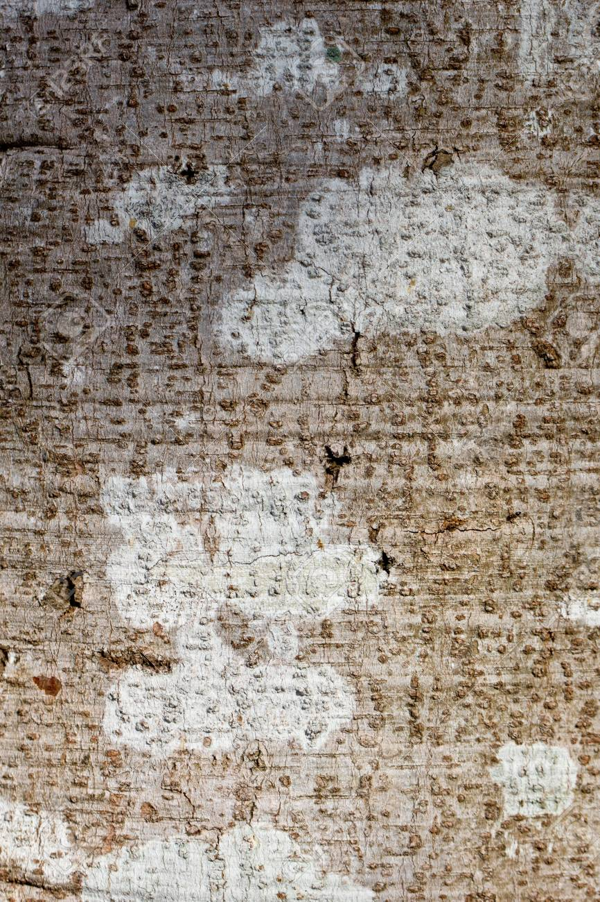 wood background ,abstract natural Stock Photo - 18724217