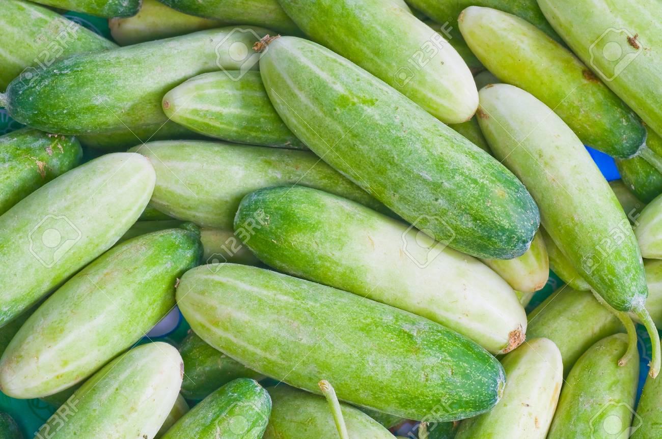 cucumber Stock Photo - 7661368
