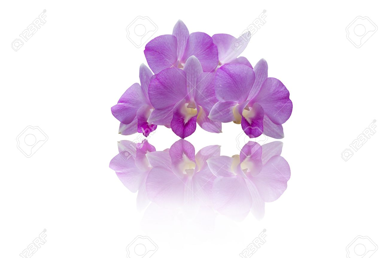 purple orchid isolated on white background Stock Photo - 8284888