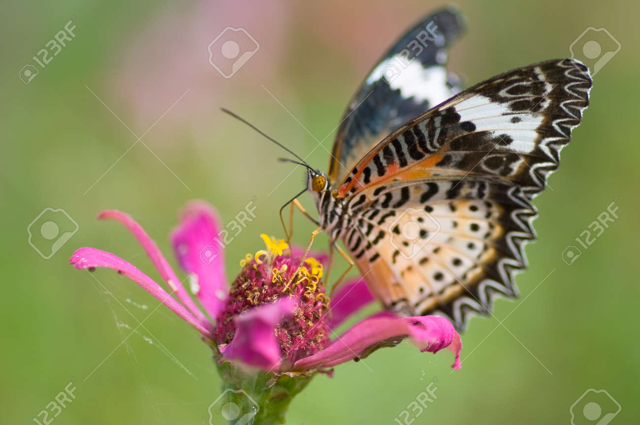 colorful monarch butterfly on  flower Stock Photo - 11011091