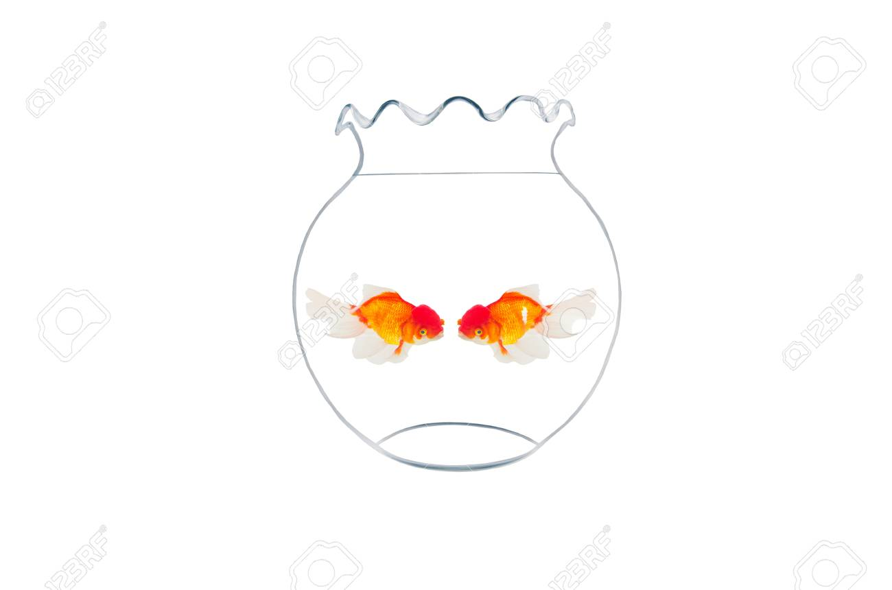 golden fishes in fishbowl isolated on white background Stock Photo - 20445883