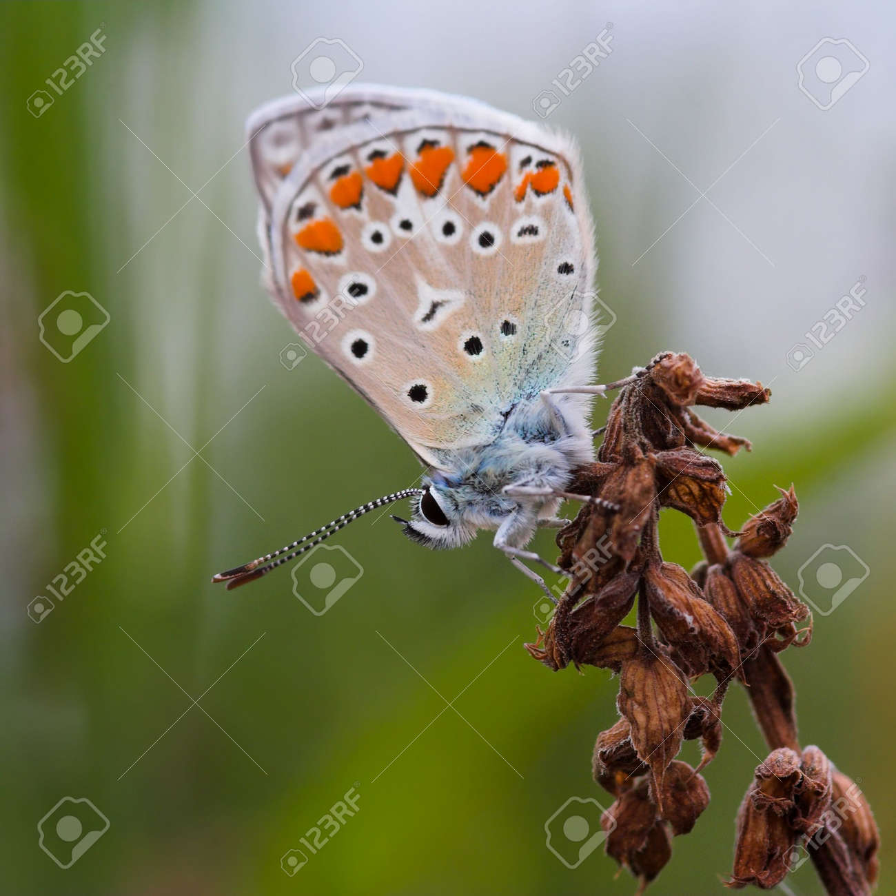 Closeup of a butterfly sitting on a flower. Stock Photo - 890382