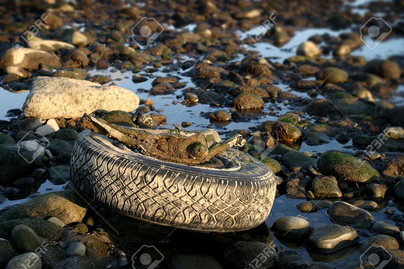 An old tire exposed by a low tide. Stock Photo - 2479684