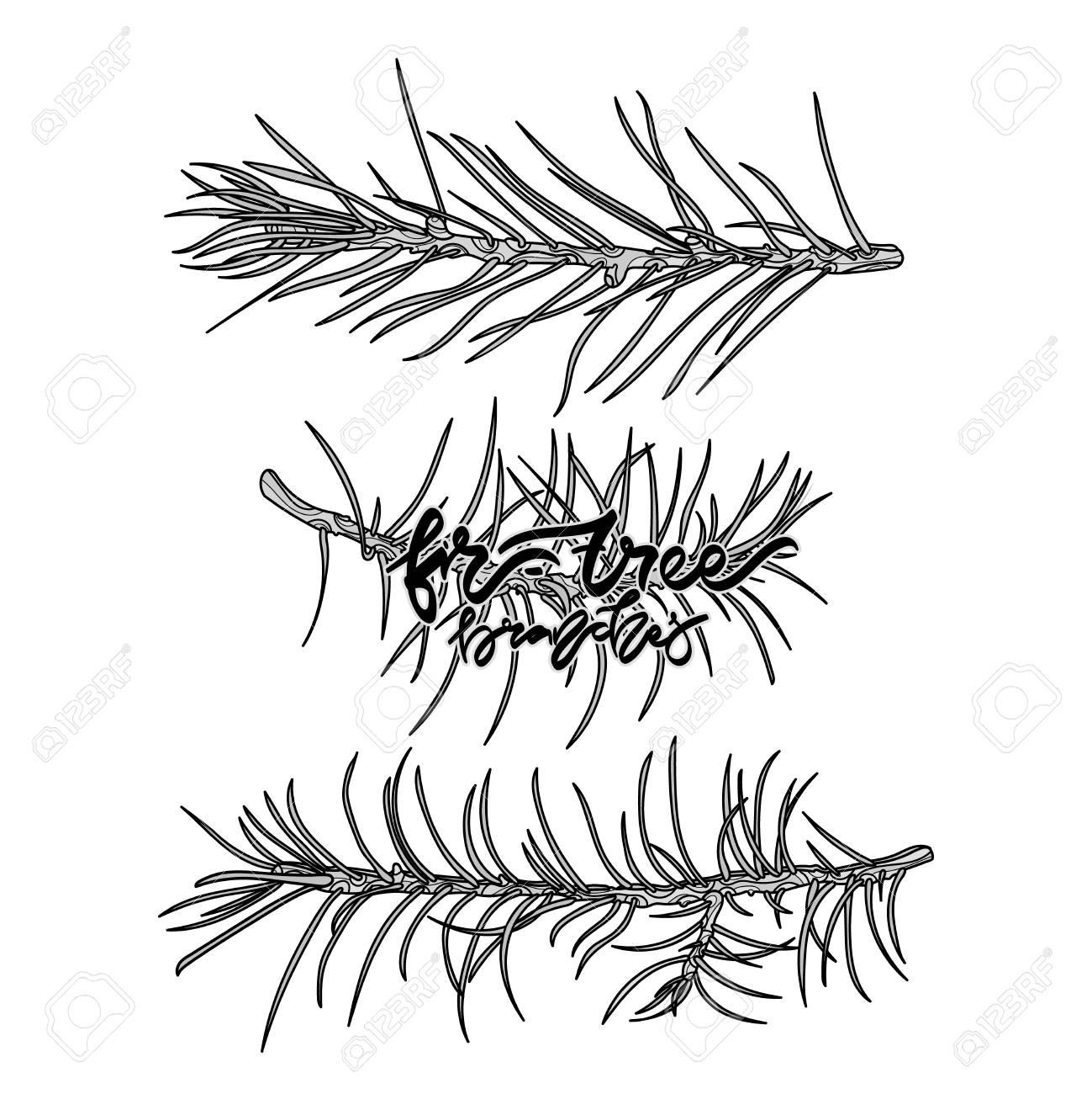 fir tree monochrome branches vector illustration hand drawn  fir tree monochrome branches vector illustration hand drawn lettering