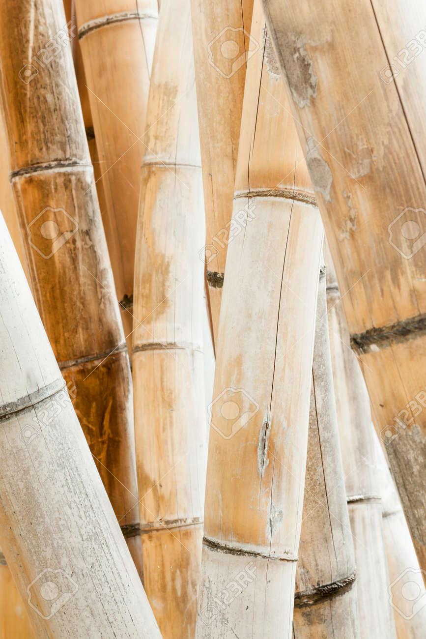 Steli Di Bamb.Secchi Steli Di Bambu