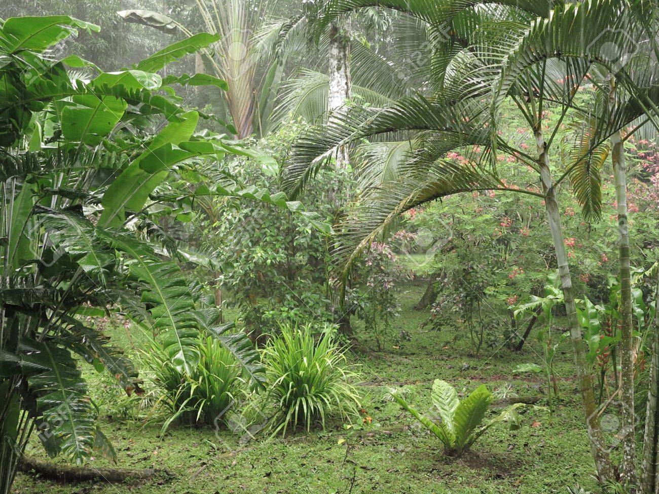 tropical rainforest biome The landscape changed again during the pleistocene ice ages — the surface of the planet that had been dominated by tropical biomes, biological rain forest.