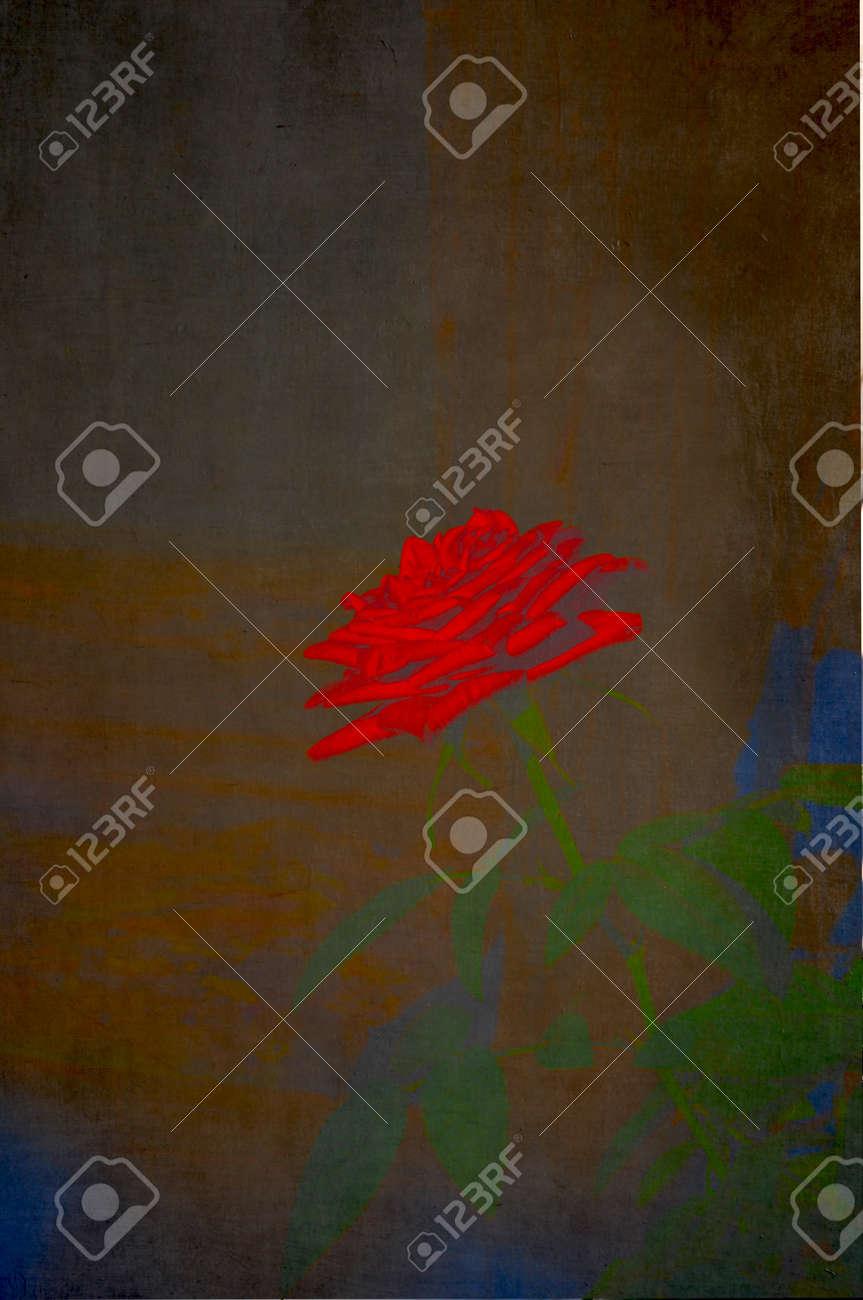 Luminous red rose background texture Stock Photo - 14272670