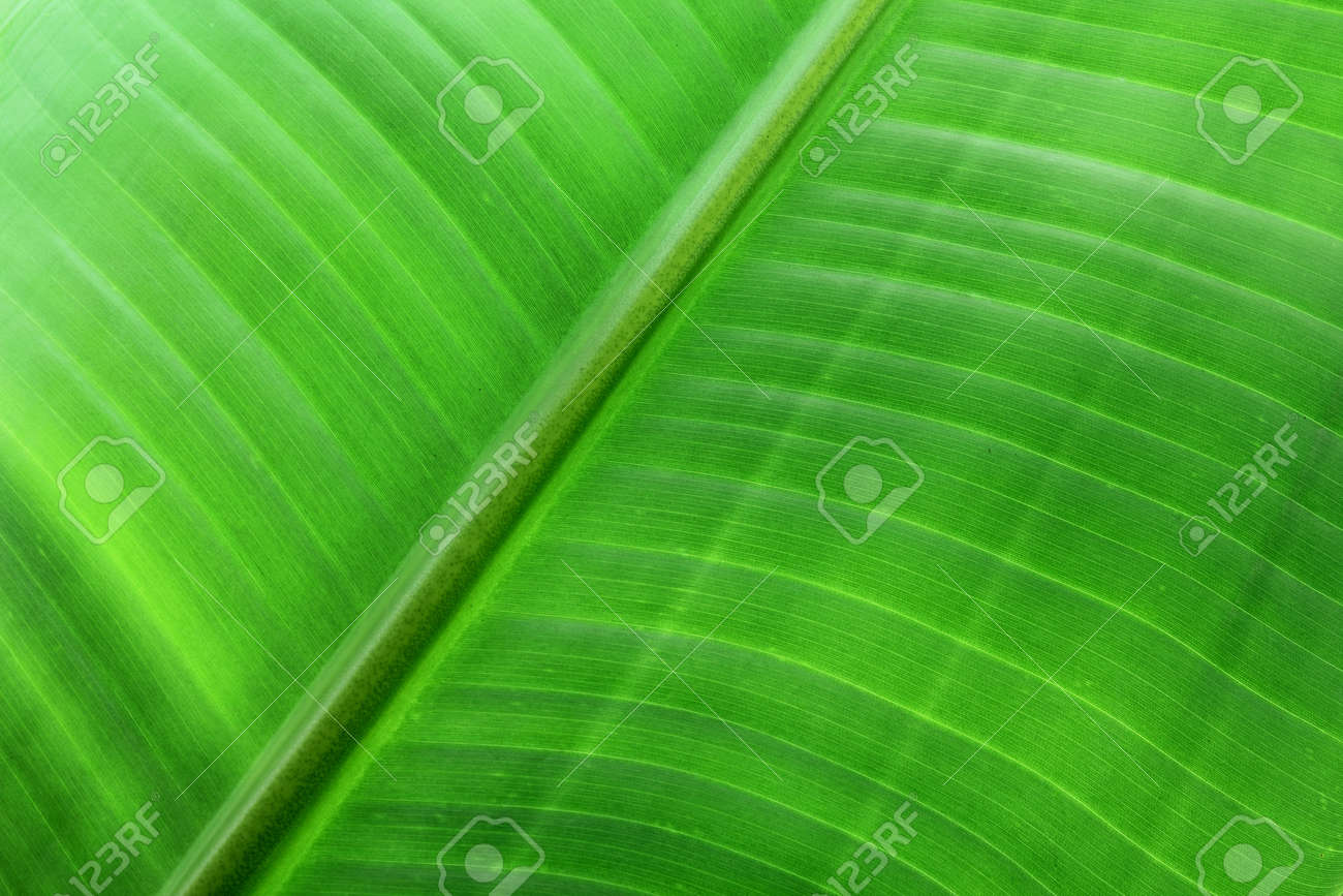 Close Up of Palm Leaf Stock Photo - 16122792