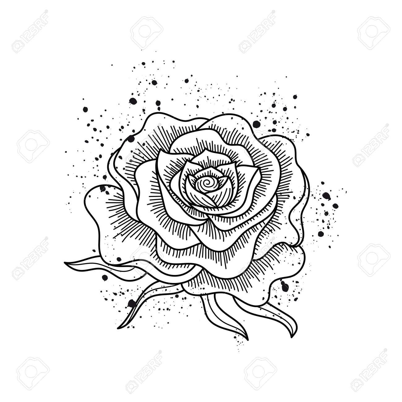 Noir Et Blanc Fleur Rose Isolé Peindre Les éclaboussures Line Art De Style De Tatouage Vector Illustration Peut être Utilisé Pour La Conception