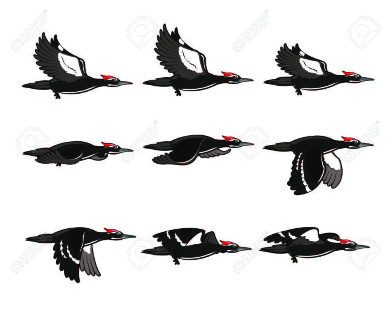 1405 Woodpecker Cliparts Stock Vector And Royalty Free