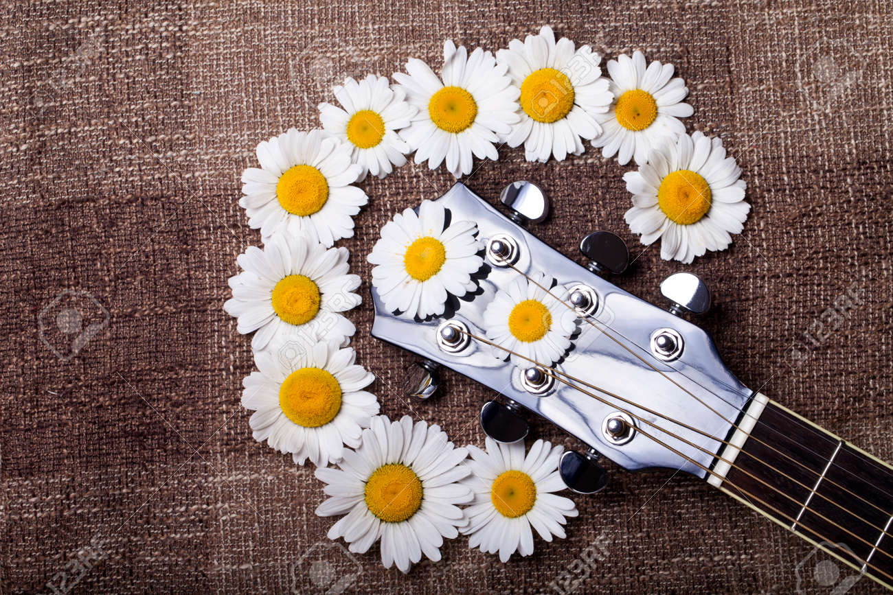 guitar and daisy flowers background wallpaper stock photo, picture