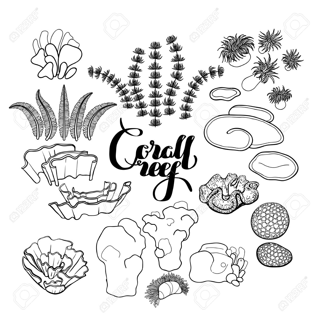 Collection Of Ocean Plants And Coral Reef Elements Drawn In