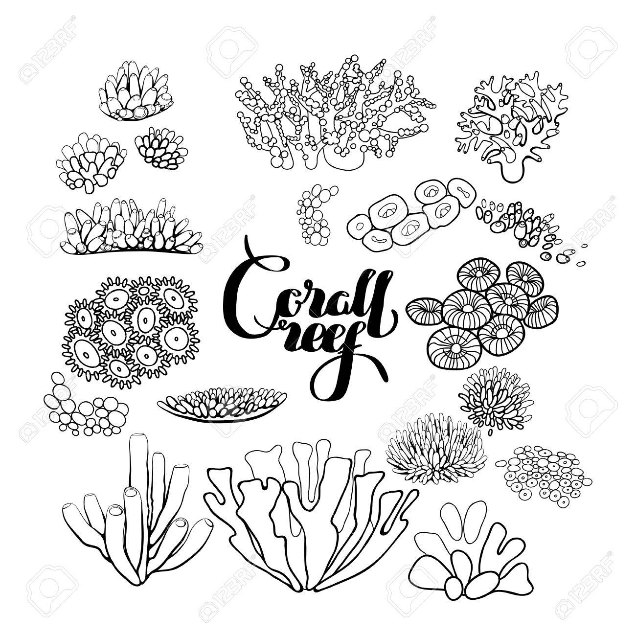 Captivating Collection Of Ocean Plants And Coral Reef Elements Drawn In Line Art Style  Isolated On White