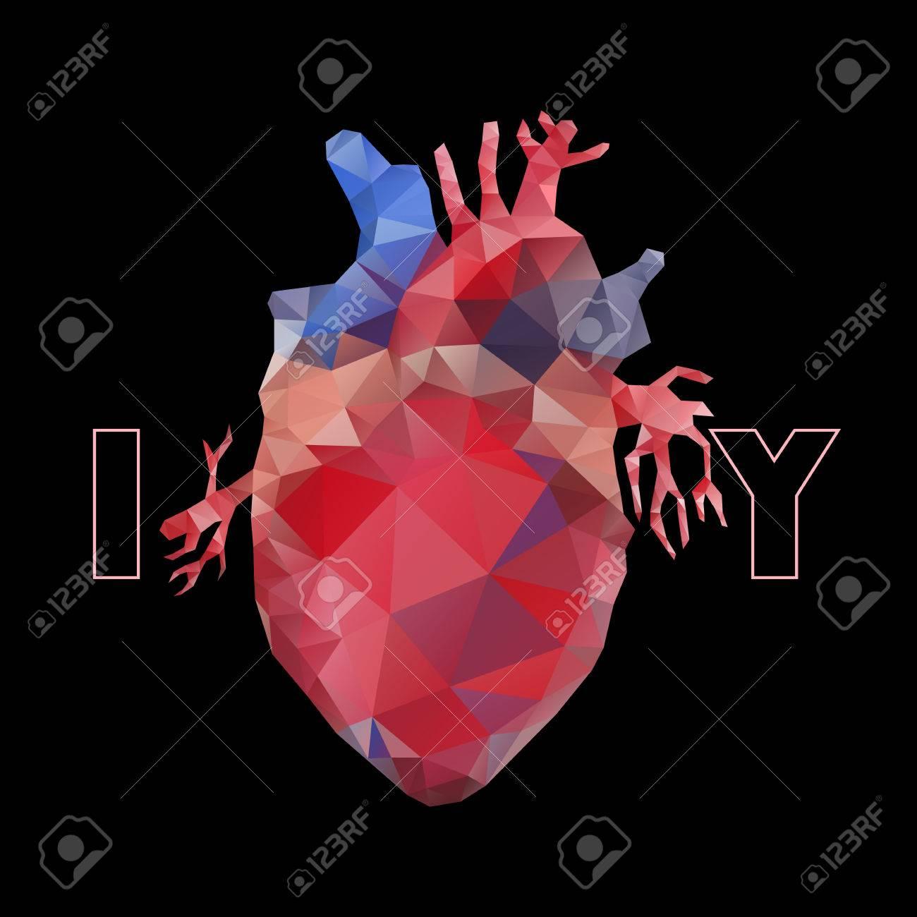 Colección Anatomía - Corazón Poligonal. Vector Aislado De órganos ...