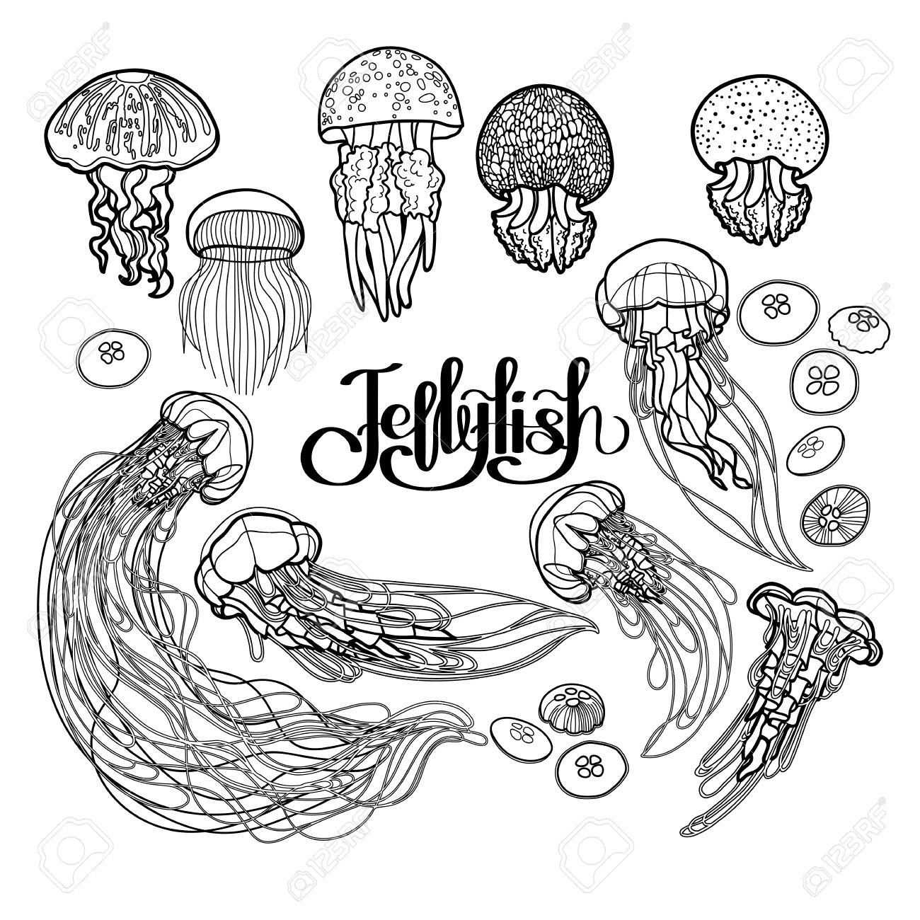 Coloring Book Page Design Jellyfish Drawn In Line Art Style Vector Ocean Animals Black And White Colors