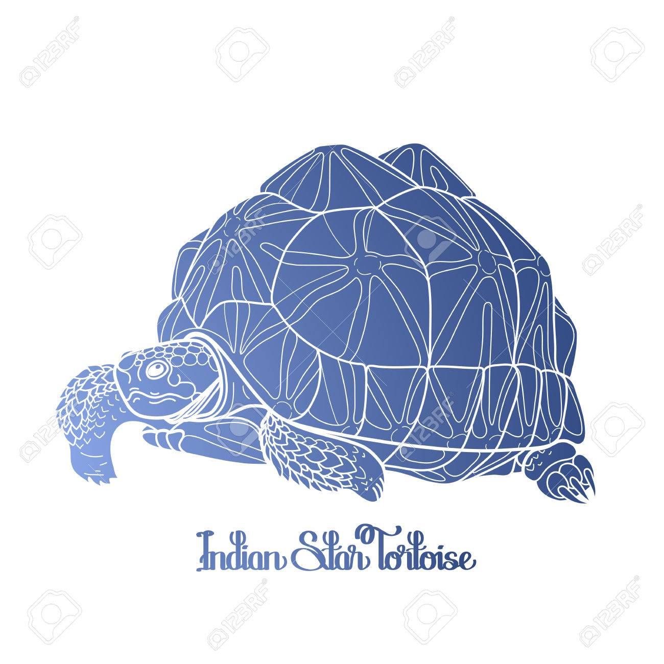 Gráfico Tortuga Estrella India Dibujado En Estilo Art Línea Aislada ...