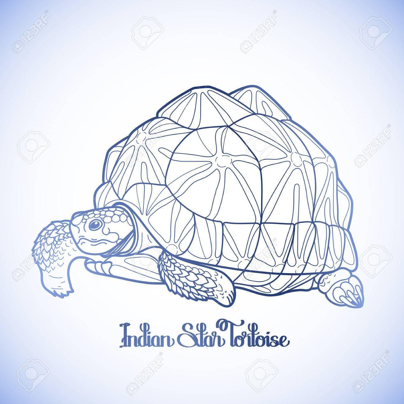 Gráfico Indio Tortuga De La Estrella Dibujada En Línea Estilo Del ...