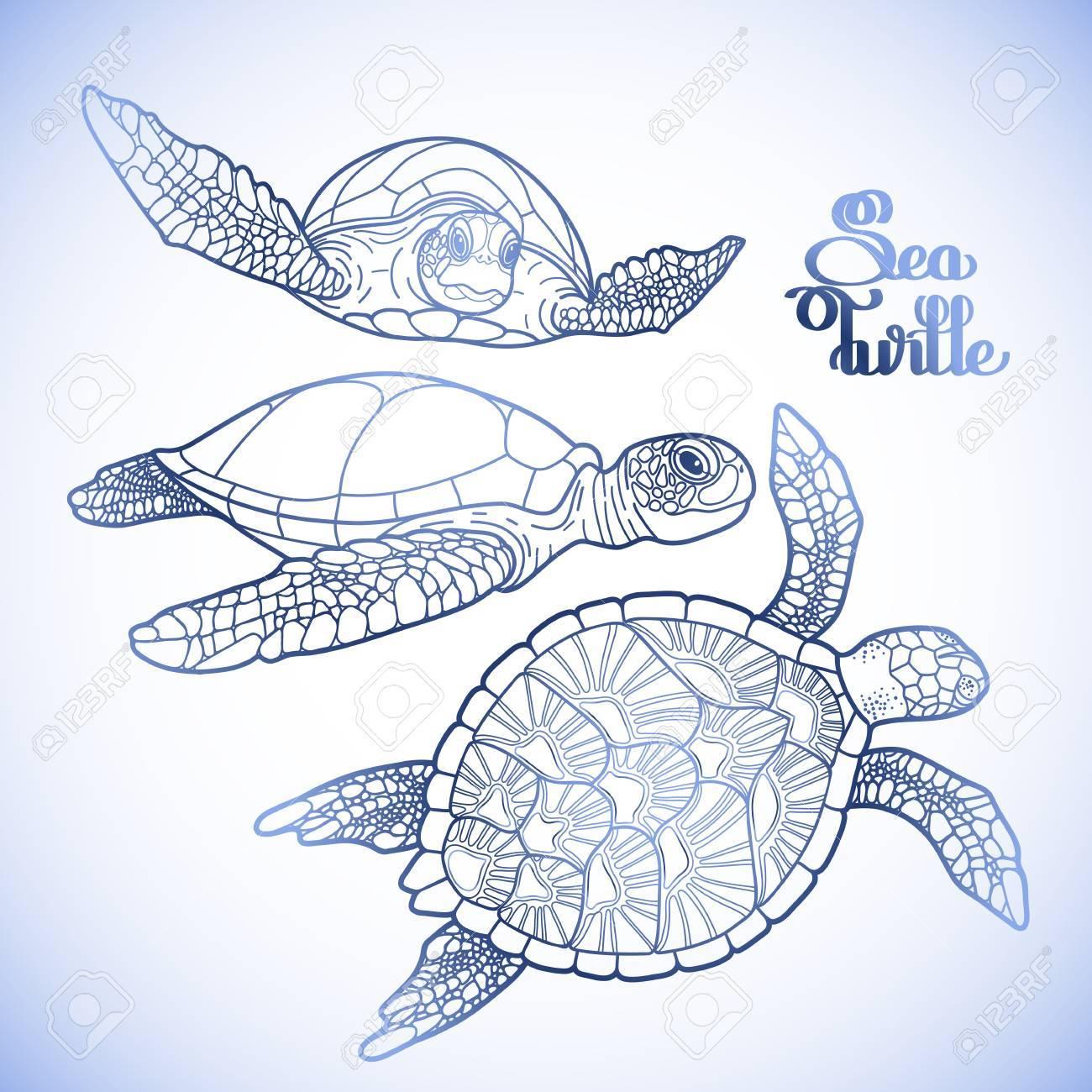 Colección Carey De Tortuga Marina Gráfico Dibujado En El Estilo De ...
