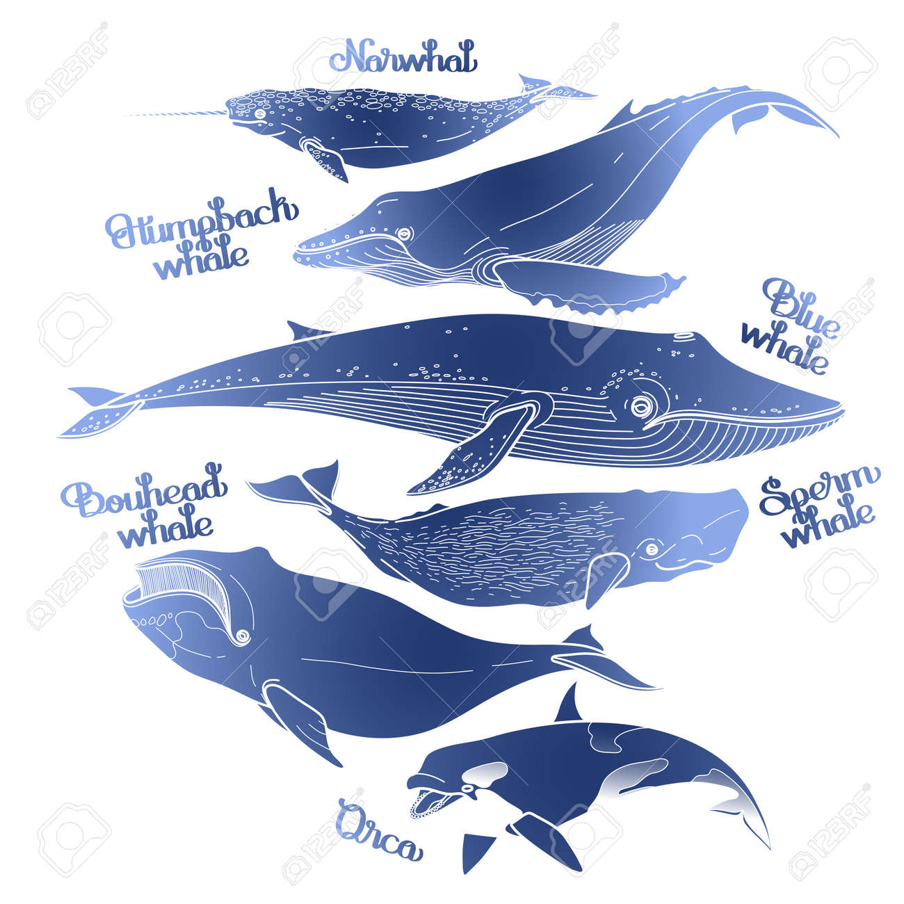 Collection of graphic whales isolated on white background  Vector