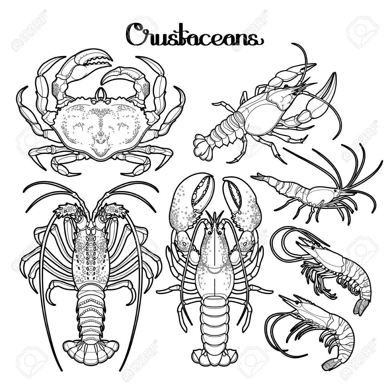 Colección De Crustáceos Gráfico Dibujado En El Estilo De La Línea De ...