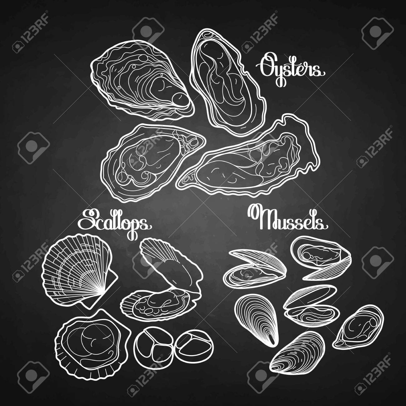 Graphic vector mussels, oysters and scallops drawn in line art style in black and white colors. Sea and ocean clams isolated on chalkboard. Seafood ingredients for menu design - 56287791