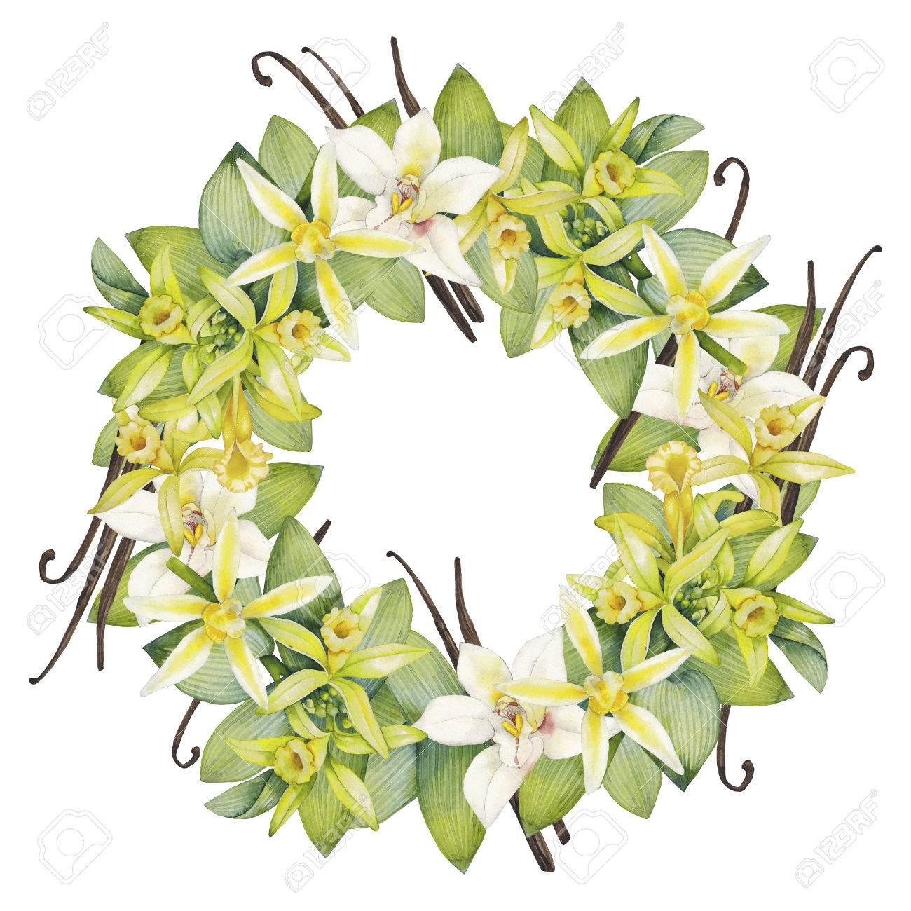 Watercolor vanilla wreath. Hand painted floral design - 58553695