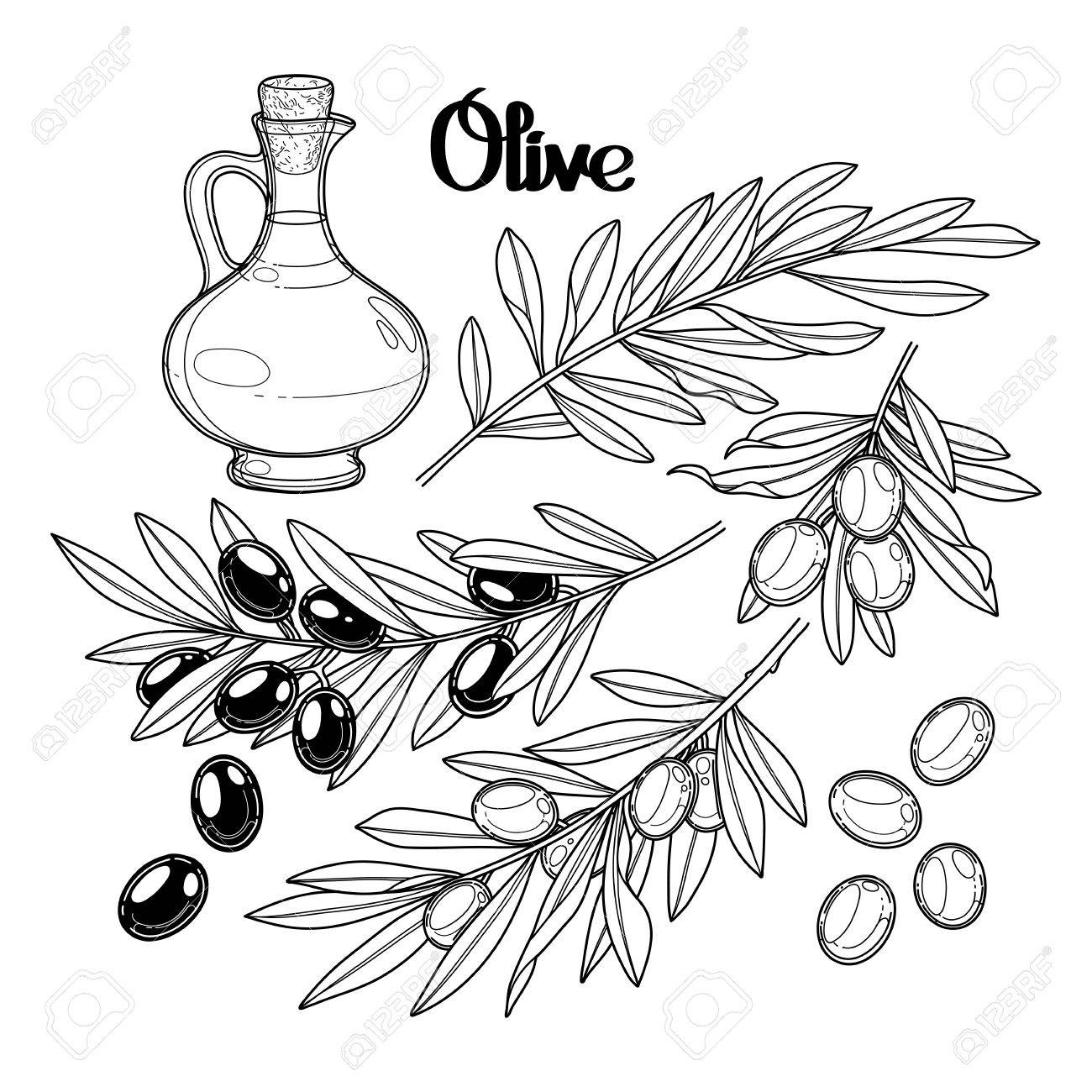 Coloriage Arbre Dolive.Collection D Olive Graphique Isole Sur Fond Blanc Olives Sur Les