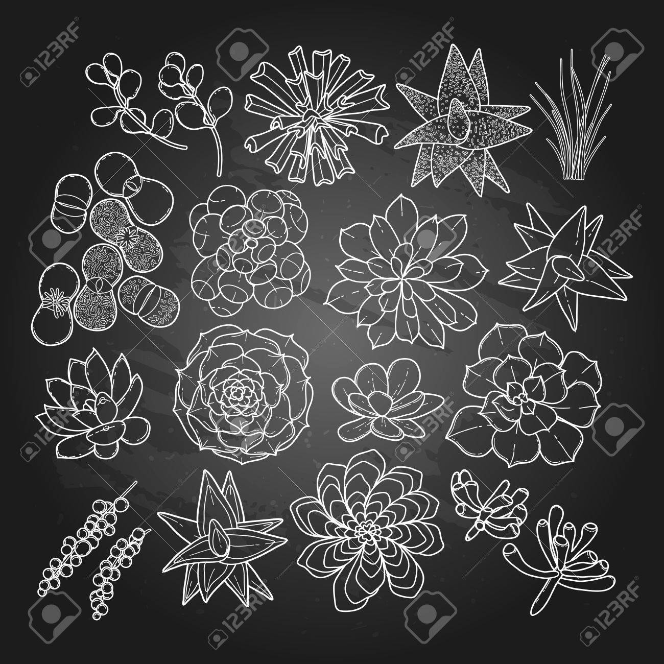 Graphic Succulent Collection Isolated On Chalkboard Vector Floral Royalty Free Cliparts Vectors And Stock Illustration Image 58970076