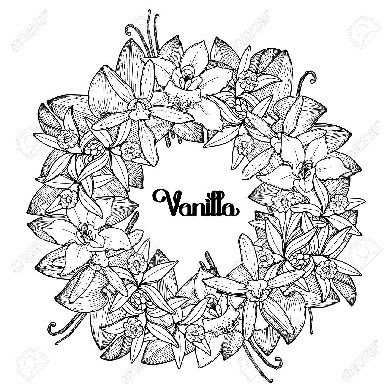 Graphic Vanilla Wreath Vector Floral Decoration Coloring Book Page Design For Adults And Kids