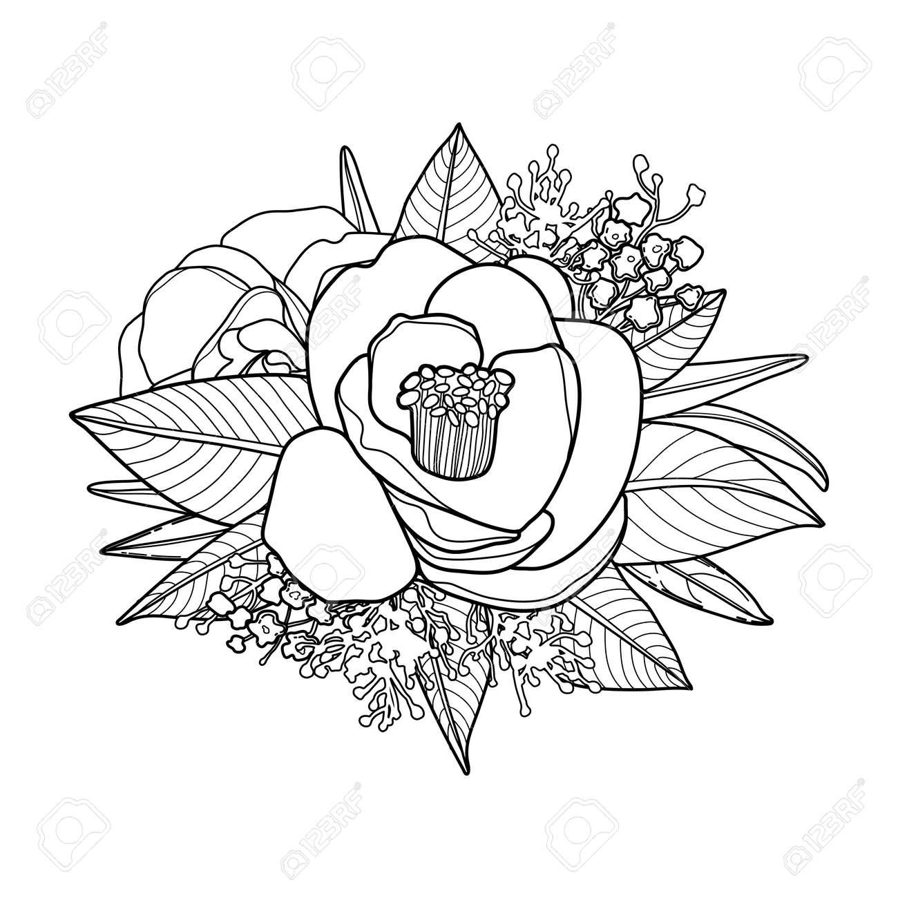 Tarjeta Floral Gráfico. Vector De Camelia Hojas Y Flores En Una ...