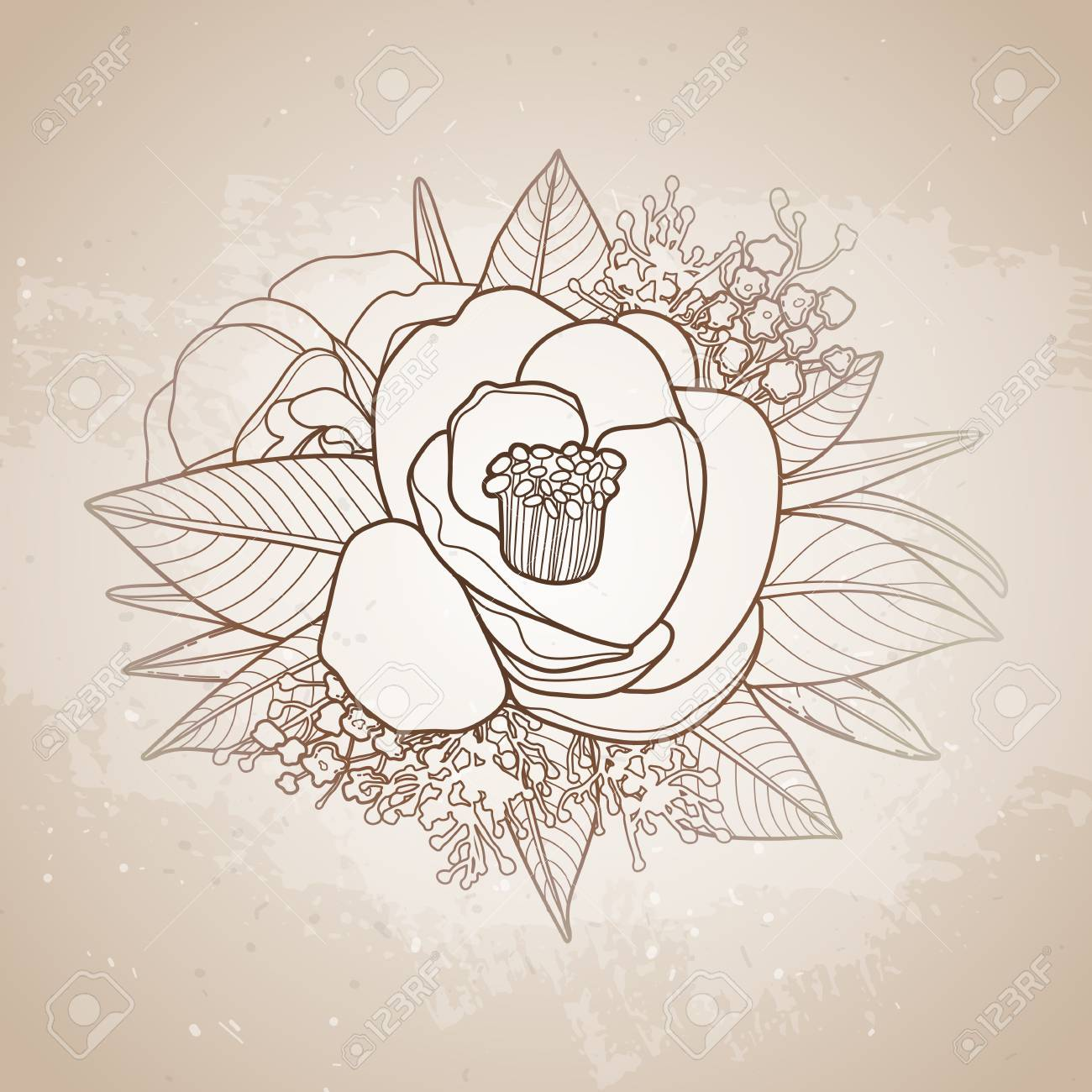 Vector Camellia Leaves And Flowers In Cute Vignette Isolated On Aged Texture