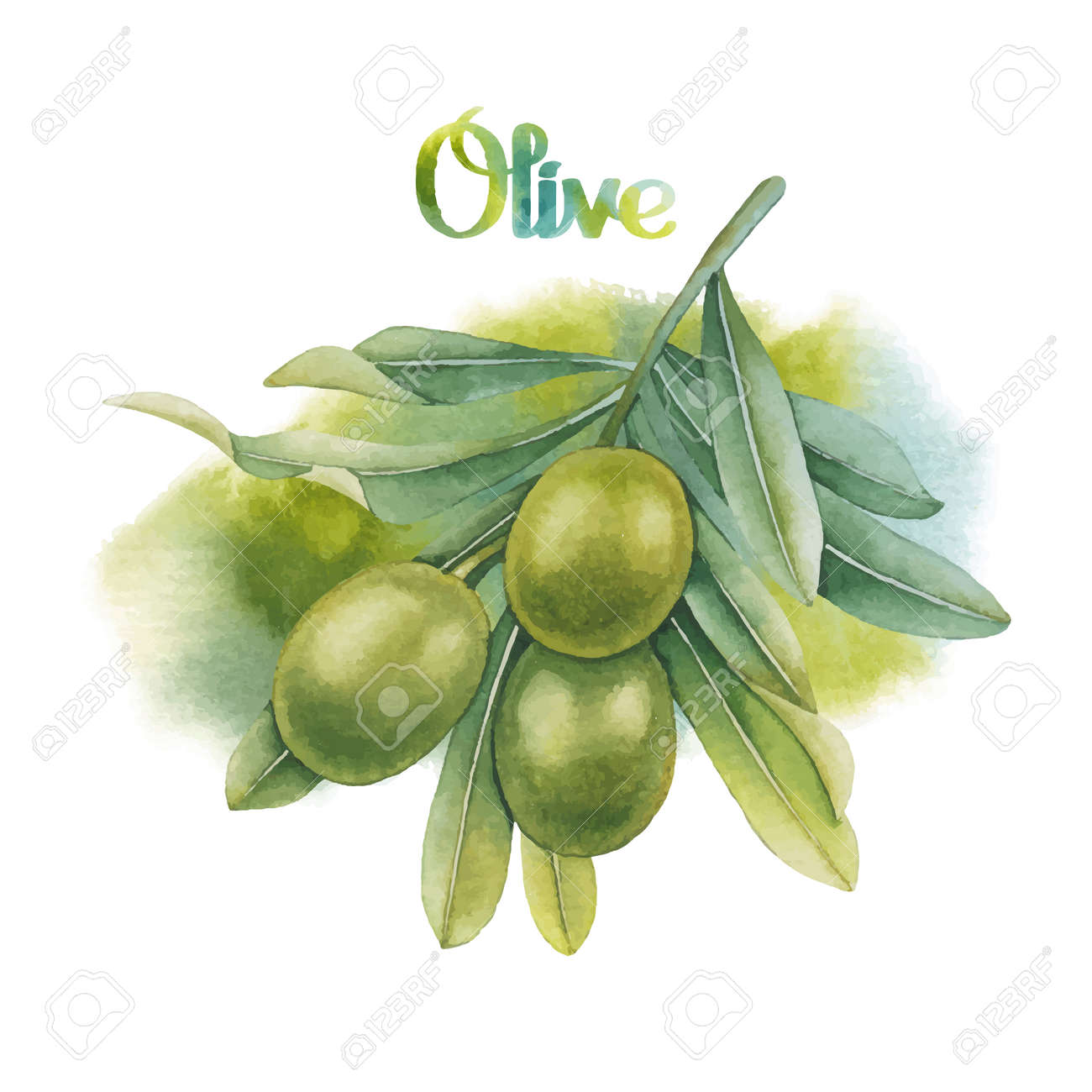 Watercolor Green Olive Branch With Watercolor Texture On Background ...