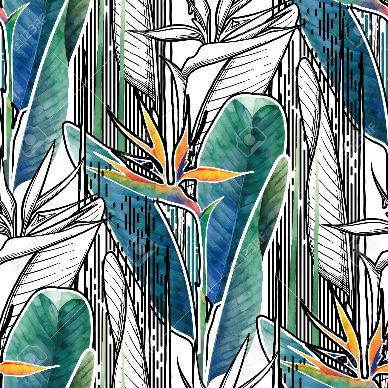 Vector seamless pattern of exotic strelitzia flowers drawn in line graphic and watercolor artistic techniques - 96976058