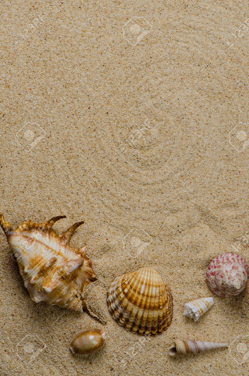 Sea shells with sand as background. Stock Photo - 14263209
