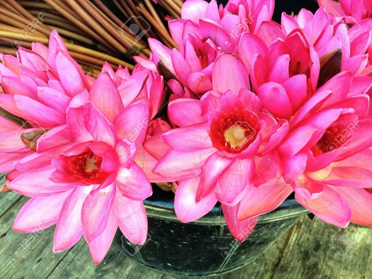 Lotus flowers bunch comousar lotus flowers bunch bunch of lotus flower mightylinksfo