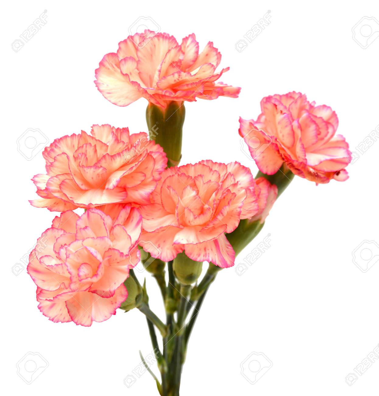 d24446c88934 An assorted carnation bouquet Stock Photo - 96431307