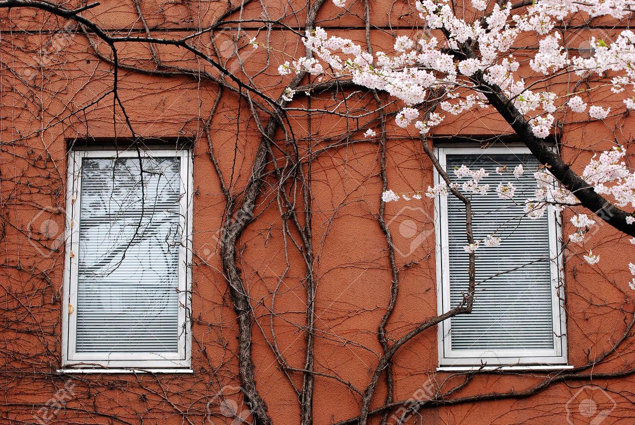 window. Stock Photo - 11209215